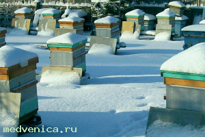 Подкормка пчел в зиму