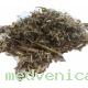 Шалфей, трава (крафт пакет, 50 гр.)