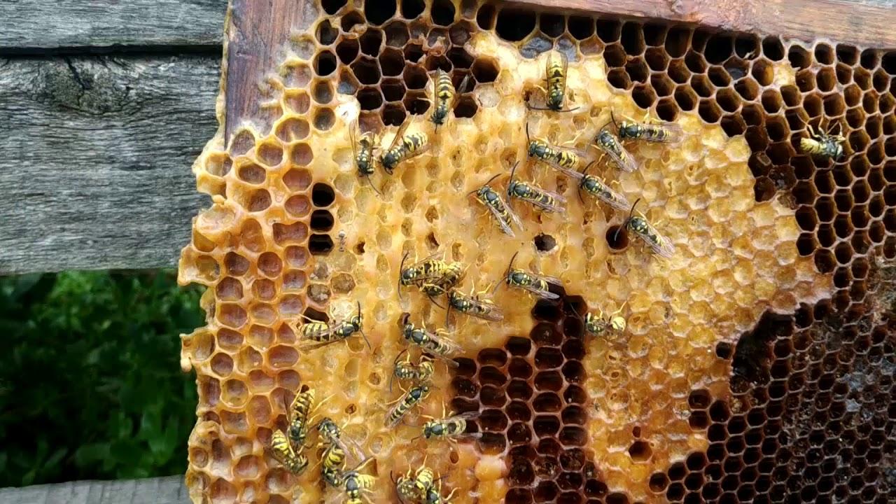 Нападение на пчёл осенью